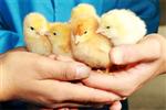 陕西贝博体彩-ballbetapp禽业